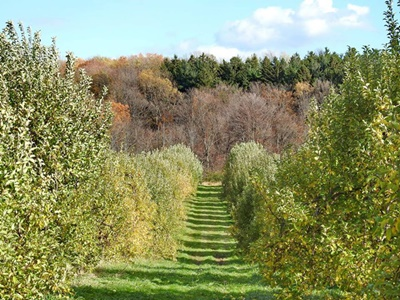 End of Apple Season <i>- by Cathy Contant</i>