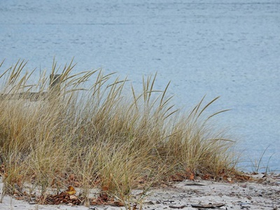 Beach Grass on Lake Ontario <i>- by Cathy Contant</i>